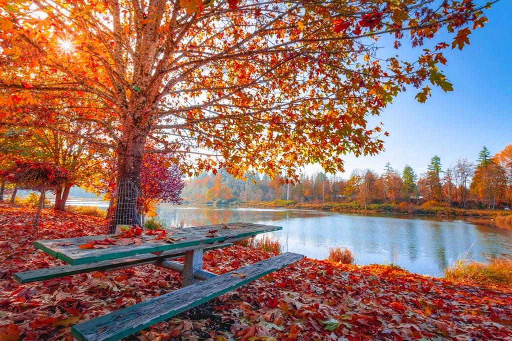 Pretty-Pictures-Fall.jpg